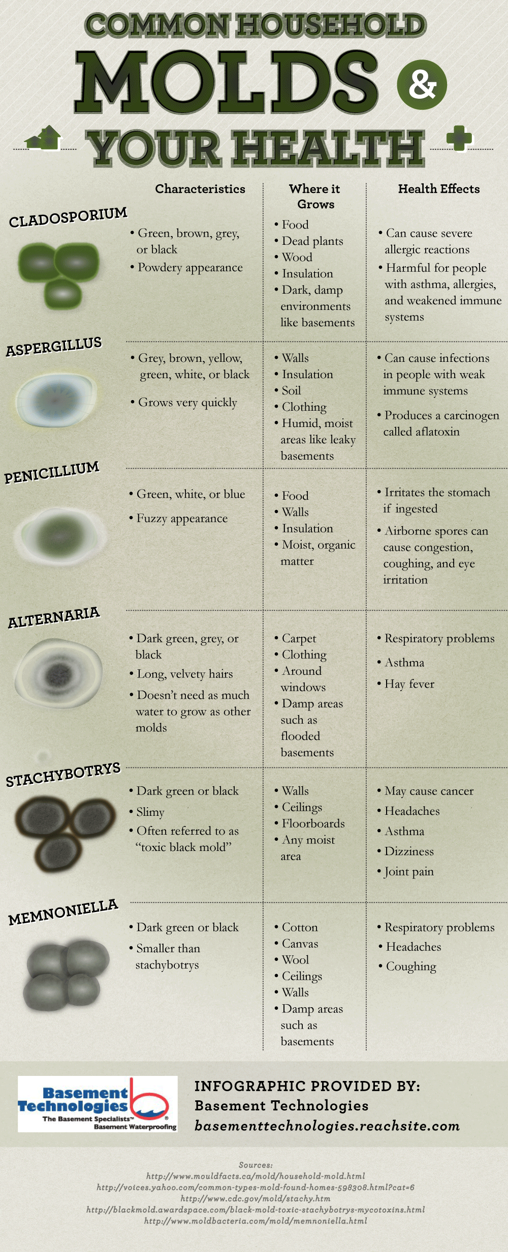 Common Mold Types