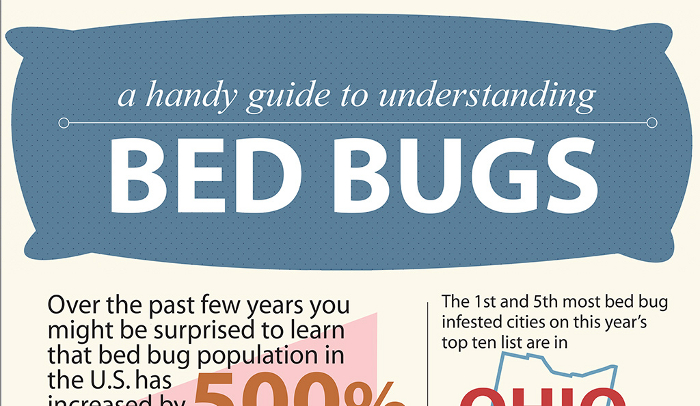 Difference Between Flea Bites and Bed Bug Bites | HRFnd