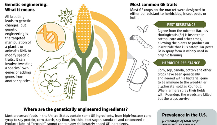 genetic engineering animal and plant The genetic modification could give gm plants, animals, or microorganisms an  advantage that would allow them to increase in numbers and.