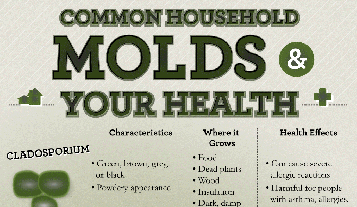 Black Mold In Bathroom Health Hazard difference between black mold and mildew | hrfnd