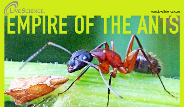 Home Remedies For Sugar Ants