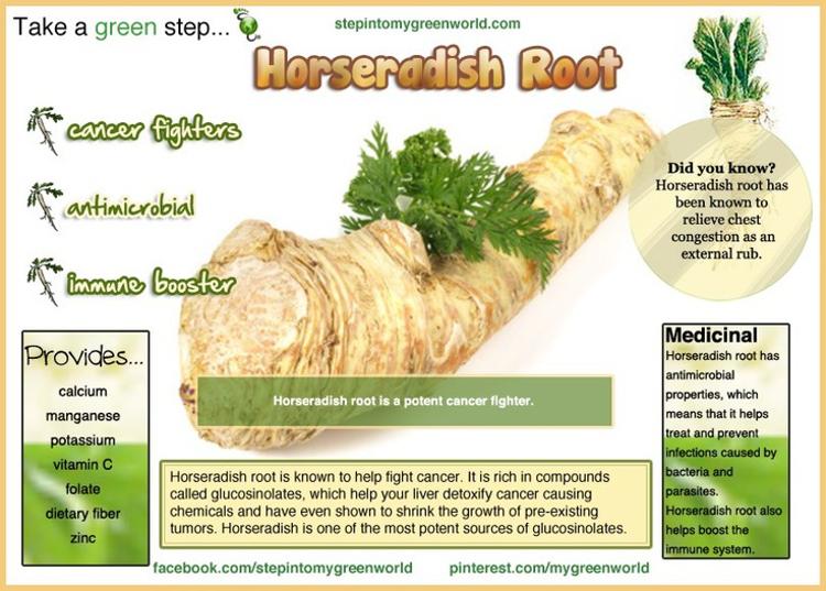 Take A Green Step Horseradish Root