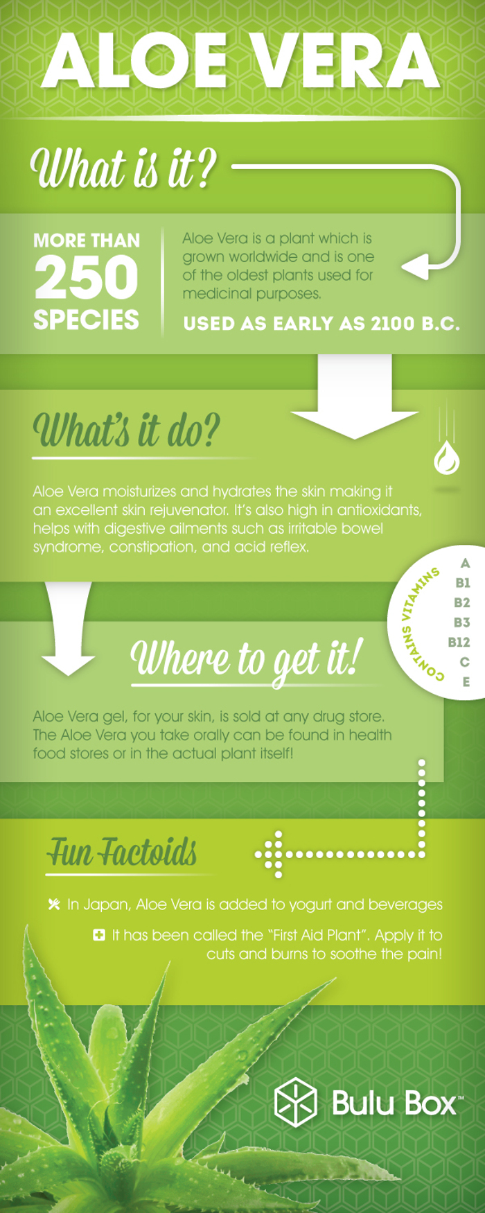 How to transplant aloe 94