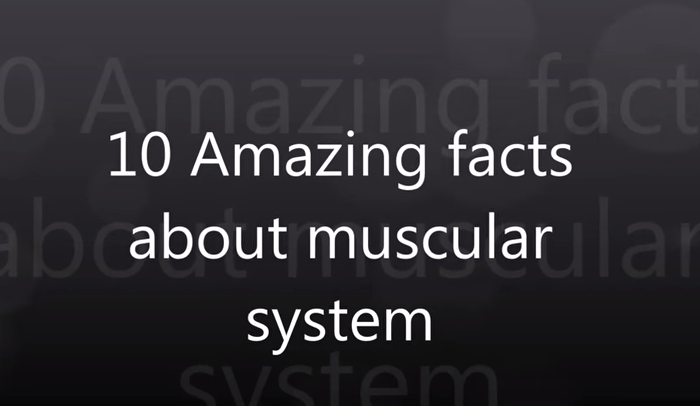 9 interesting facts about the muscular system | hrfnd, Muscles