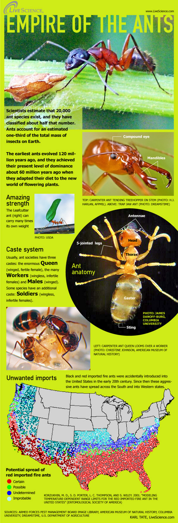 Interesting Facts About Fire Ants