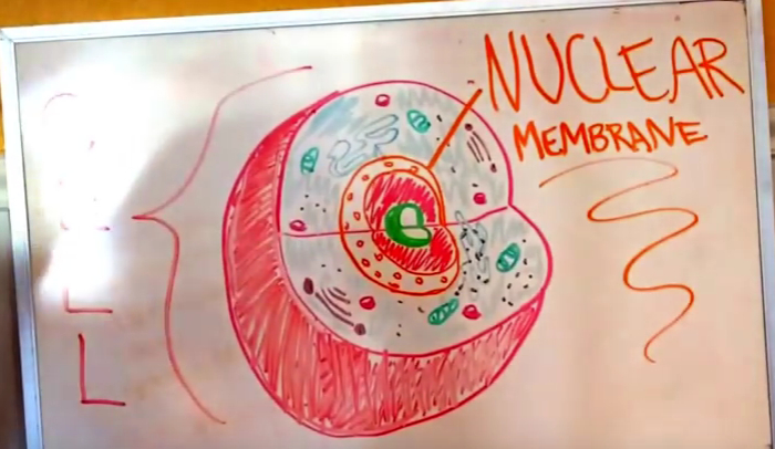 Nuclear Membrane Definition for Kids