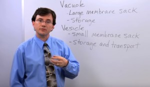 Vacuole Definition for Kids