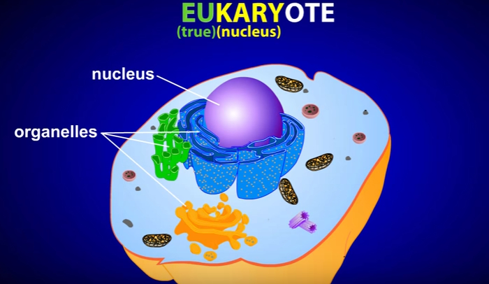 endosymbiotic-theory-of-the-origin-of-eukaryotic-cells