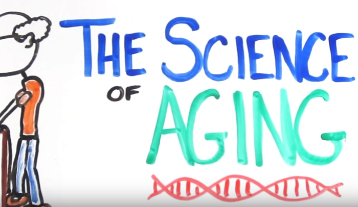the-activity-theory-of-aging-explained